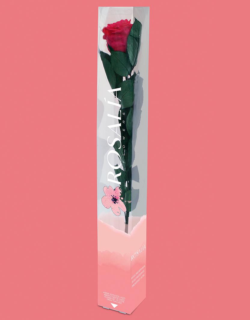 Rosalía. marca y envase para flores preservadas